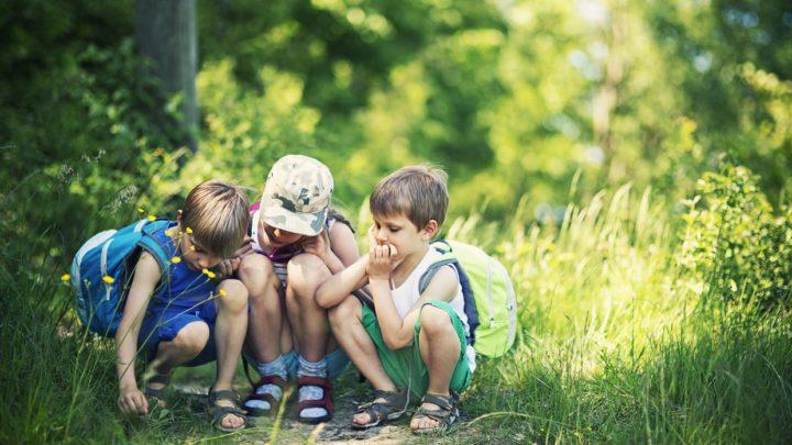 warsztaty dla dzieci w lesie