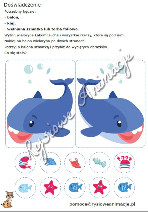 karty pracy rekin doświadczenie
